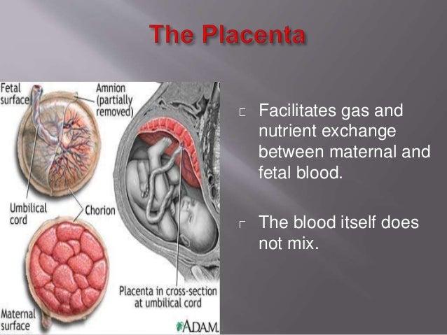 Placenta Umbilical Vein Umbilical Arteries Liver Ductus Venosus Inferior Venacava Right Atrium Foramen Ovale Right Lung Ar...