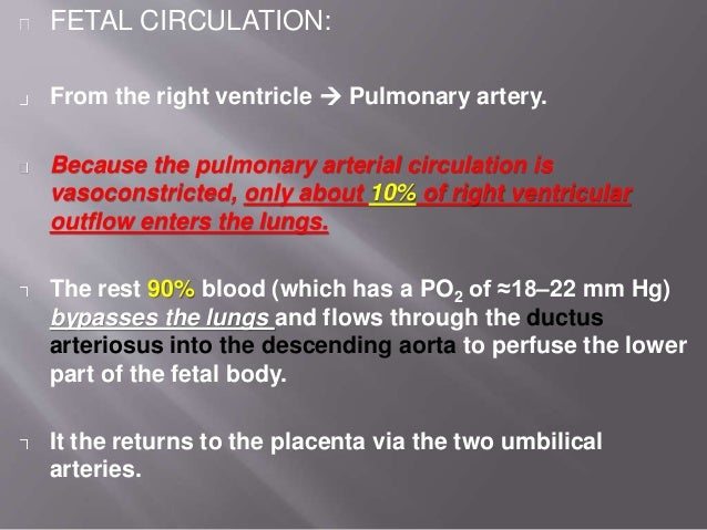 LA  LV  Aorta  Ductus arteriosus Foramen ovale RV SVC  upper body IVC 50% through 50% to ductus venosus Portal circula...
