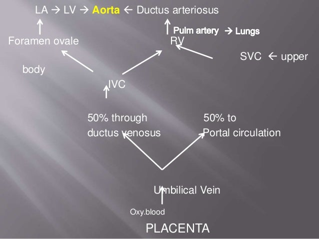 During fetal life 350ml per kg per min Cardiac Output Following birth 500ml per min Heart Rate 120-140per min