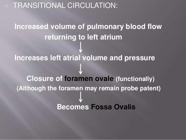 Umbilical arteries → Umbilical ligaments Umbilical vein → Ligamentum teres Shunt Functional closure Anatomical closure Rem...