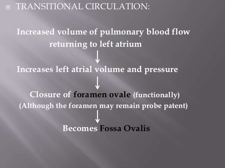    The left ventricle in the fetus pumped blood only to the    upper part of the body and brain   After birth, LV must d...