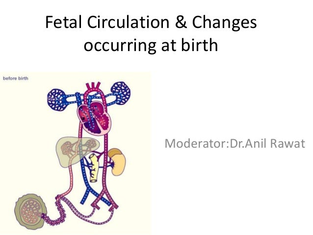 Fetal Circulation & Changes occurring at birth Moderator:Dr.Anil Rawat
