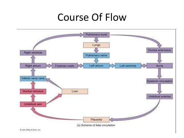 Fetal circulation & changes occurring at birth