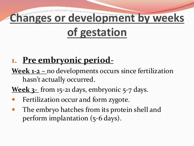 what is the length of an embryo during this time