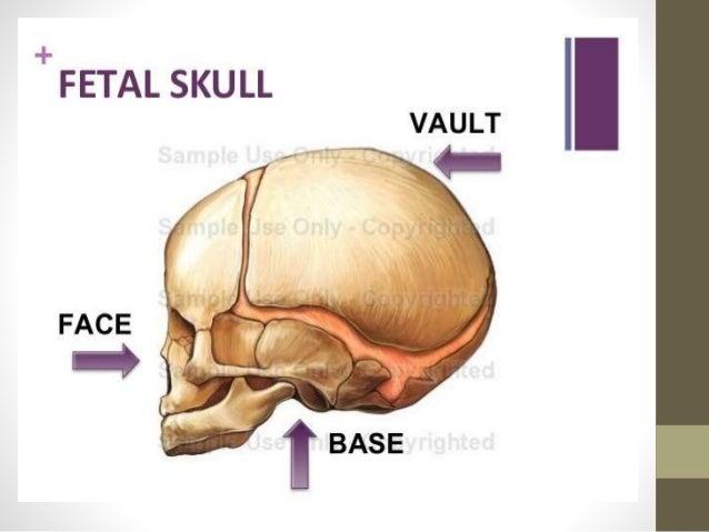 Fetal skull ppt