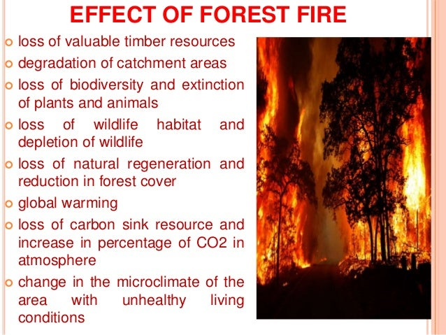 the effects of fire on soil and water Negative effects of low-severity fire on soil structure and organic matter date:  they observed that pore pressure within the soil aggregates rose to a peak as water boiled and vaporized, then.