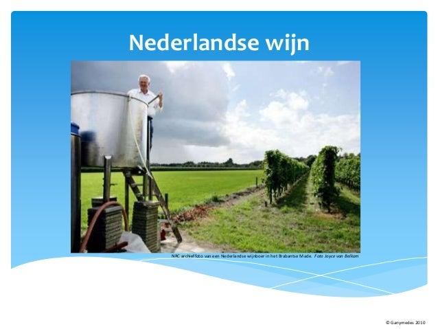 Nederlandse wijn NRC archieffoto van een Nederlandse wijnboer in het Brabantse Made. Foto Joyce van Belkom © Ganymedes 2010