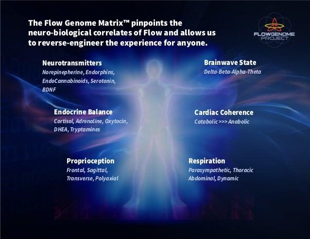 Neurotransmitters Norepinepherine, Endorphins, EndoCannabinoids, Serotonin, BDNF The Flow Genome Matrix™ pinpoints the neu...