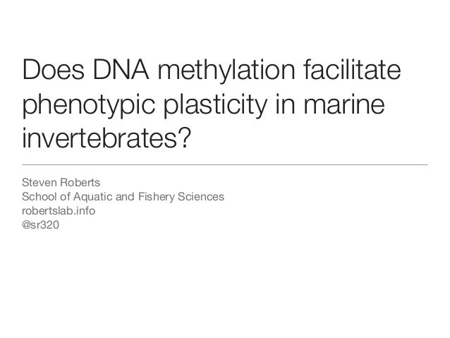 Does DNA methylation facilitate phenotypic plasticity in marine invertebrates? Steven Roberts School of Aquatic and Fisher...