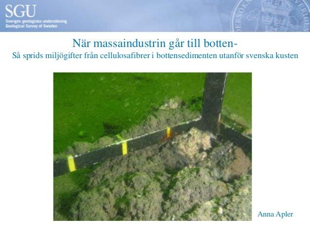 När massaindustrin går till botten-Så sprids miljögifter från cellulosafibrer i bottensedimenten utanför svenska kusten   ...