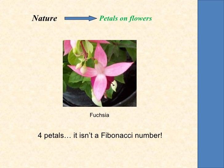 Nature             Petals on flowers                Fuchsia 4 petals… it isn't a Fibonacci number!