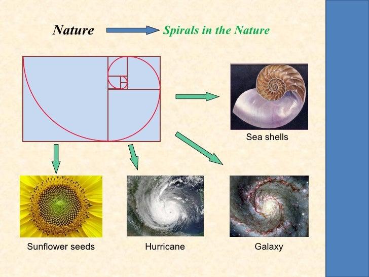 Nature           Spirals in the Nature                                      Sea shellsSunflower seeds   Hurricane         ...