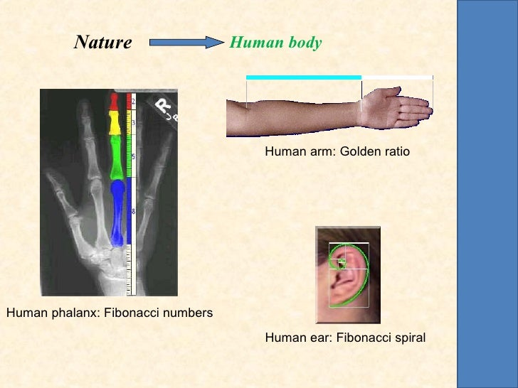 Nature                   Human body                                      Human arm: Golden ratioHuman phalanx: Fibonacci n...