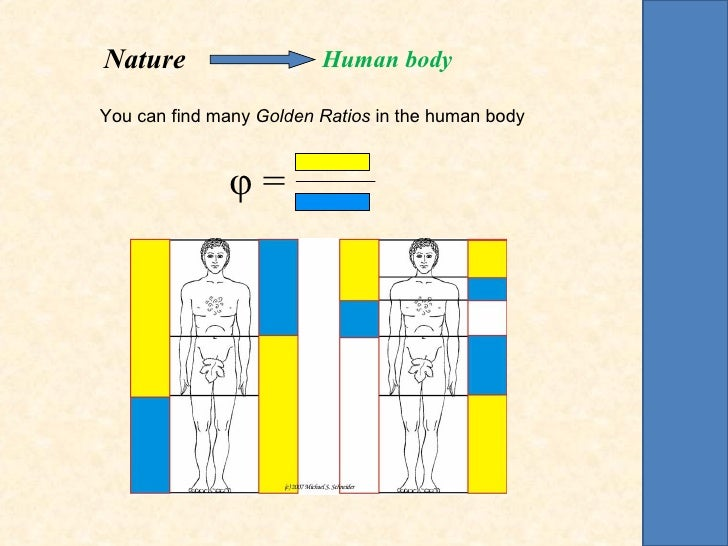 Nature                   Human bodyYou can find many Golden Ratios in the human body              φ=