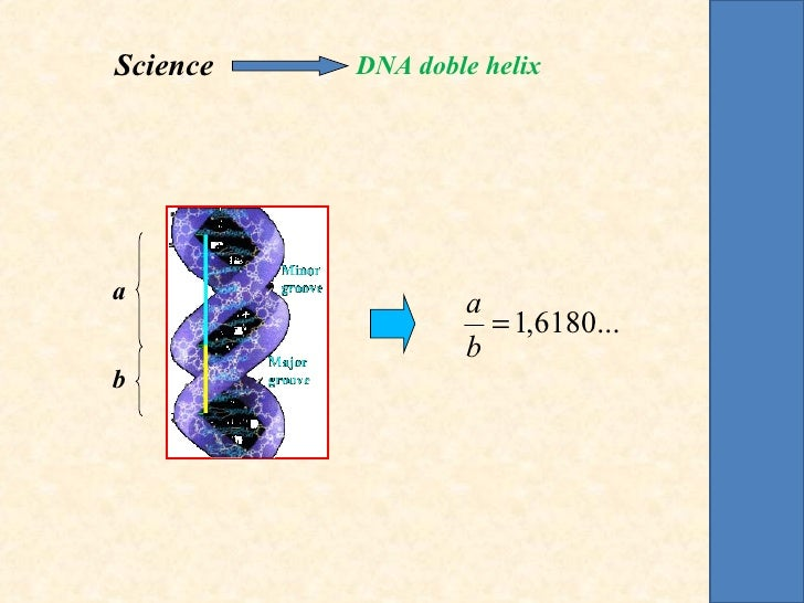Science   DNA doble helixa                 a                    = 1,6180...                  bb