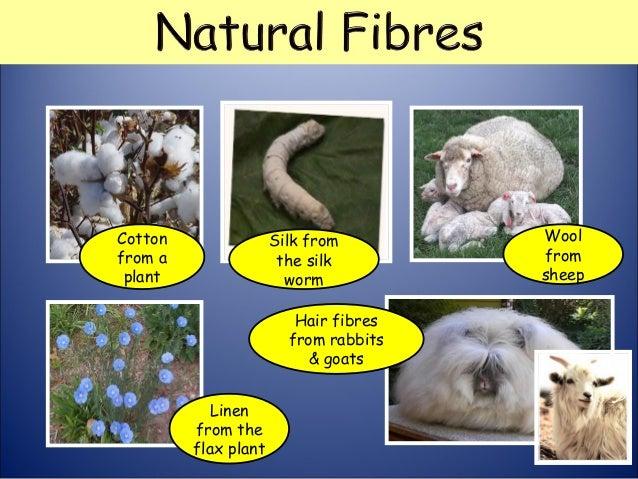 Fibre And Hair Analysis