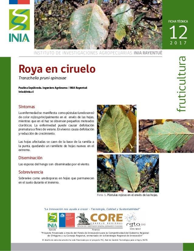 Síntomas La enfermedad se manifiesta como pústulas (uredosoros) de color rojizo,principalmente en el envés de las hojas, m...