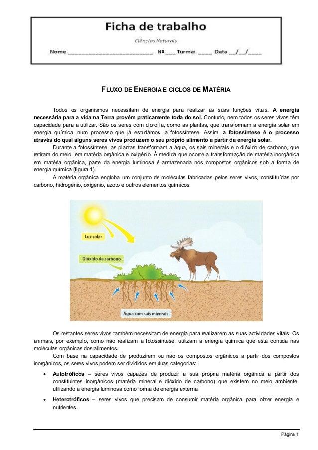 FLUXO DE ENERGIA E CICLOS DE MATÉRIA        Todos os organismos necessitam de energia para realizar as suas funções vitais...