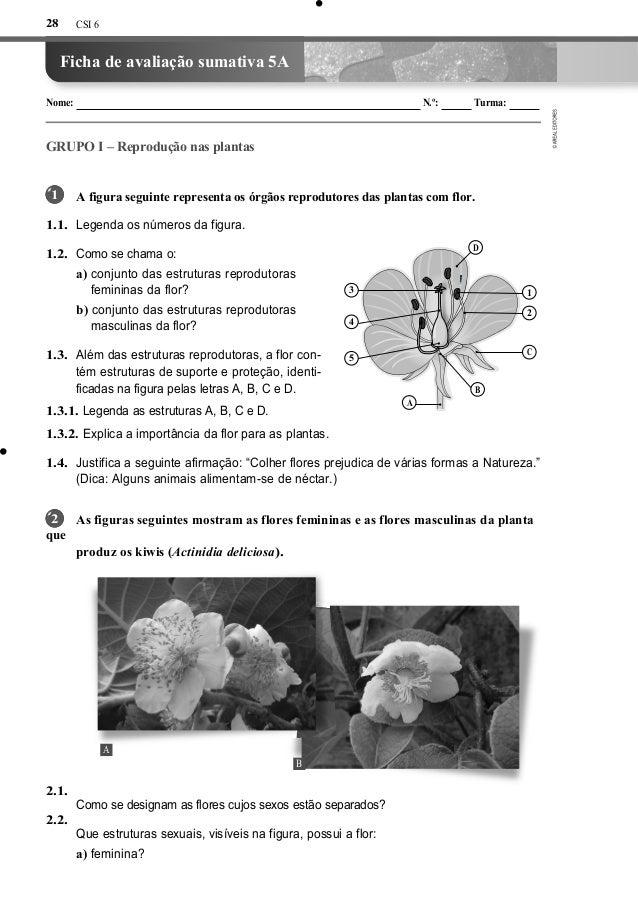 CSI 6Ficha de avaliação sumativa 5ANome: N.º: Turma:GRUPO I – Reprodução nas plantasA figura seguinte representa os órgãos...