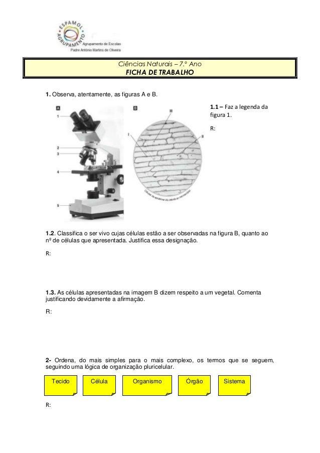 Ciências Naturais – 7.º Ano                               FICHA DE TRABALHO1. Observa, atentamente, as figuras A e B.     ...