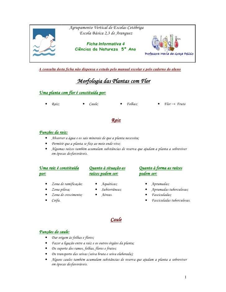 Agrupamento Vertical de Escolas Cetóbriga                         Escola Básica 2,3 de Aranguez                           ...