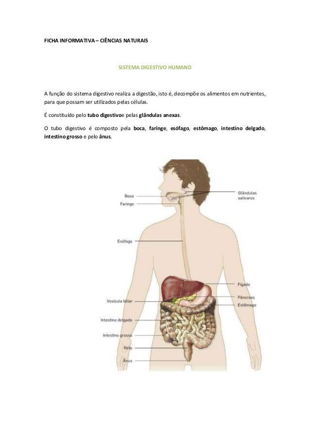 FICHA INFORMATIVA – CIÊNCIAS NATURAIS                               SISTEMA DIGESTIVO HUMANOA função do sistema digestivo ...