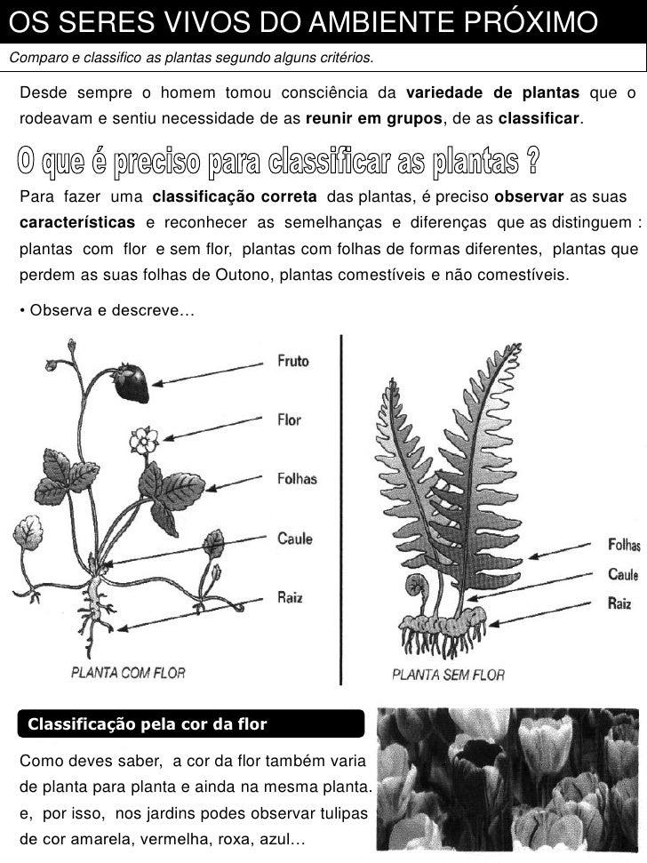 OS SERES VIVOS DO AMBIENTE PRÓXIMOComparo e classifico as plantas segundo alguns critérios. Desde sempre o homem tomou con...