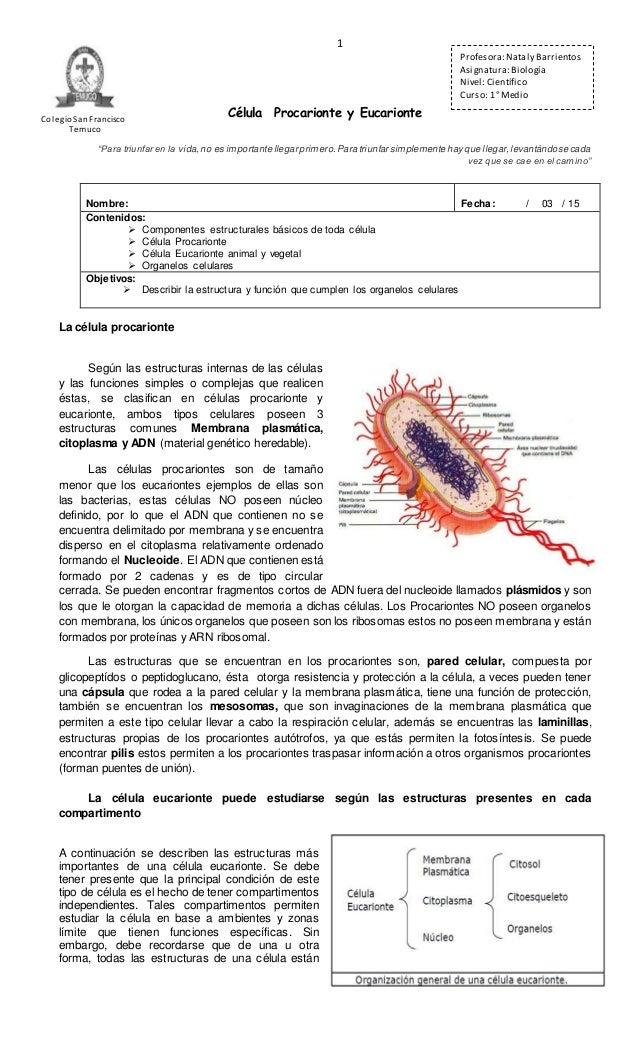Resultado de imagen de pequeñas cápsulas tubulares llamadas mitocondrias que funcionan un poco como baterias en el interior del citoplasma celular.
