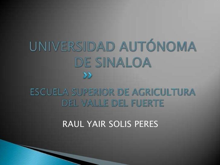 UNIVERSIDAD AUTÓNOMA DE SINALOAESCUELA SUPERIOR DE AGRICULTURA DEL VALLE DEL FUERTE<br />RAUL YAIR SOLIS PERES<br />
