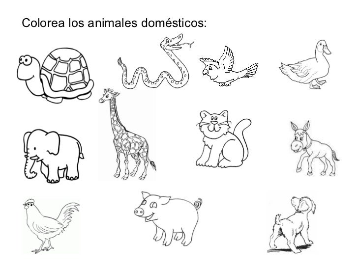 Fichas De Animales Domesticos Para Colorear En Ingles Los animales