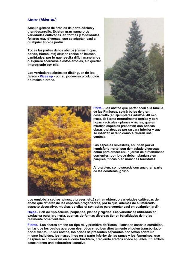 Fichas de rboles y arbustos - Arboles y arbustos ...