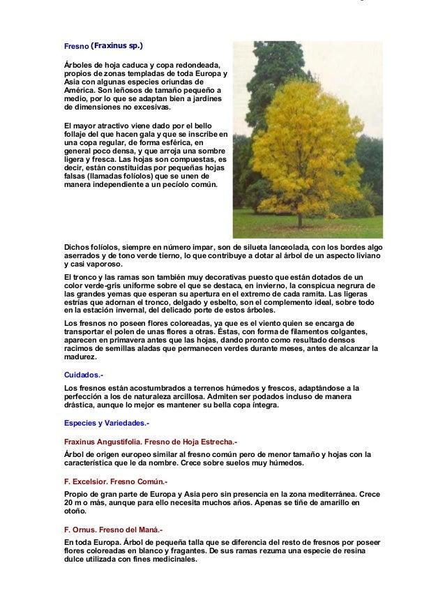 Fichas de rboles y arbustos for Arboles de jardin de hoja caduca