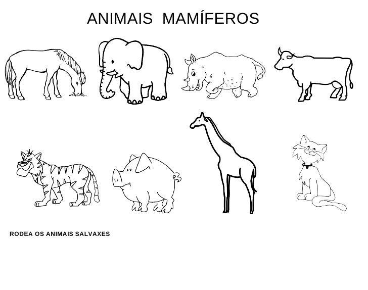 ANIMAIS  MAMÍFEROS RODEA OS ANIMAIS SALVAXES