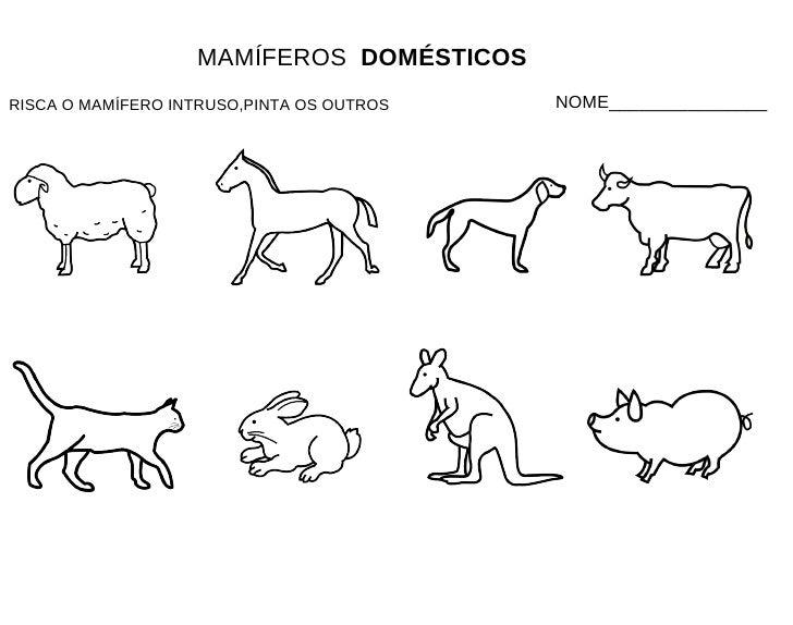 Imagenes De Animales Carnivoros Para Colorear: Fichas Mamíferos