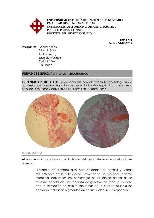 Anatomia Patologica Fichas Microscopia
