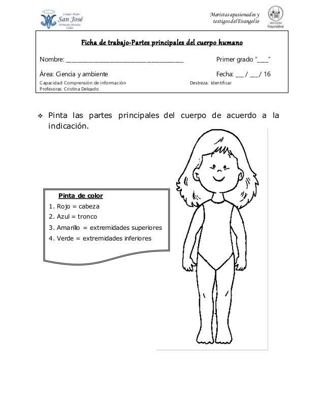 Fichas primer periodo cuerpo humano