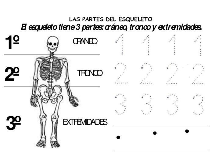Fichas sangre y esqueleto