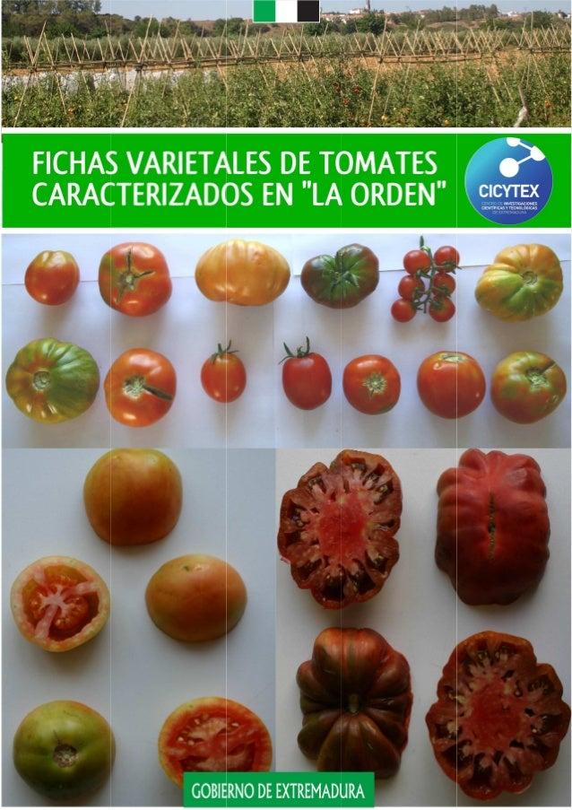 """i Fichas varietales de tomates caracterizados en """"La Orden"""" Juan Gragera Facundo José Miguel Cano Suárez Carmen Guadalupe ..."""
