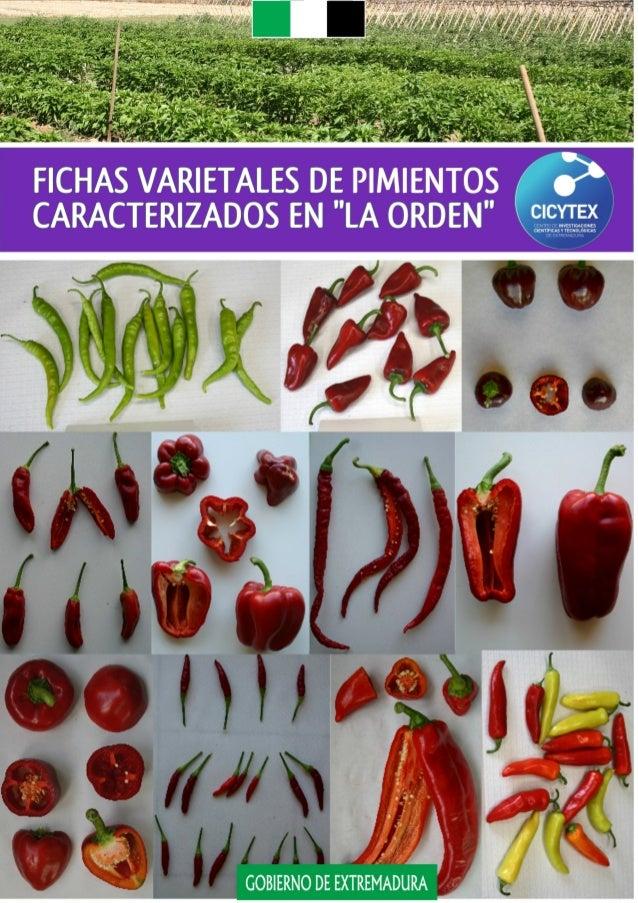 """Fichas varietales de pimientos  caracterizados en """"La Orden""""  Juan Gragera Facundo  Carmen Guadalupe Gil Torralvo  José Mi..."""