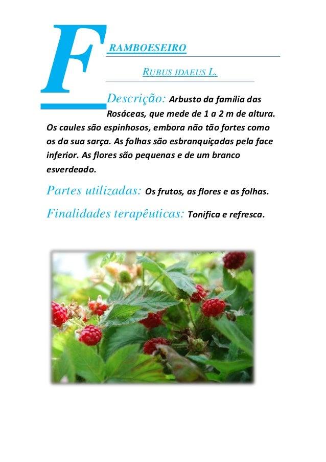 RAMBOESEIRORUBUS IDAEUS L.Descrição: Arbusto da família dasRosáceas, que mede de 1 a 2 m de altura.Os caules são espinhoso...
