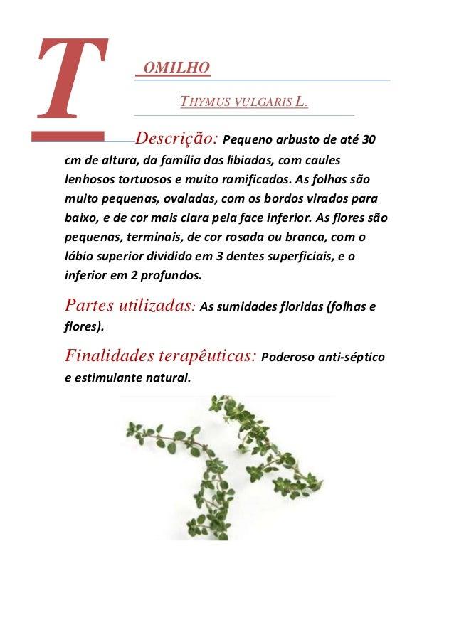 Ficha técnica de ervas aromáticas catalão Slide 2