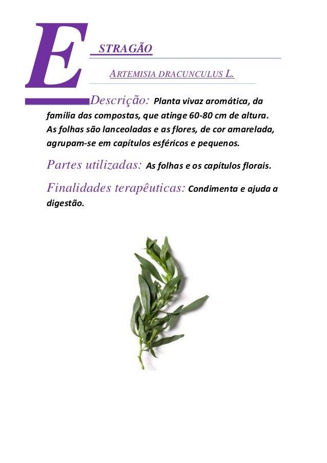 Ficha técnica de ervas aromáticas catalão Slide 3