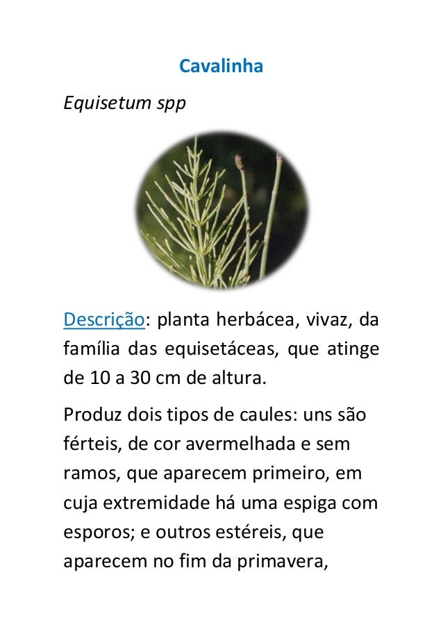 CavalinhaEquisetum sppDescrição: planta herbácea, vivaz, dafamília das equisetáceas, que atingede 10 a 30 cm de altura.Pro...