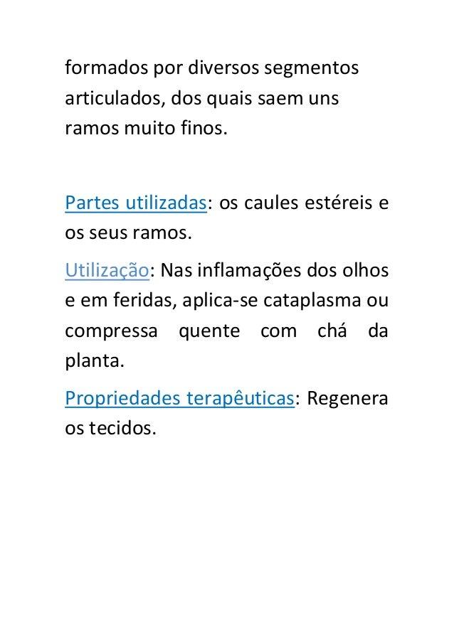 Ficha técnica de ervas aromáticas edmir Slide 2