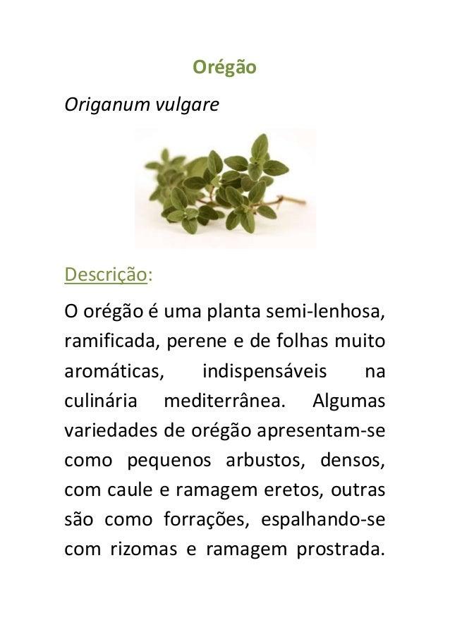 Ficha técnica de ervas aromáticas edmir Slide 3