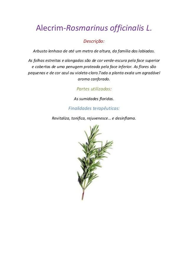 Ficha técnica de ervas aromáticas fábio Slide 2