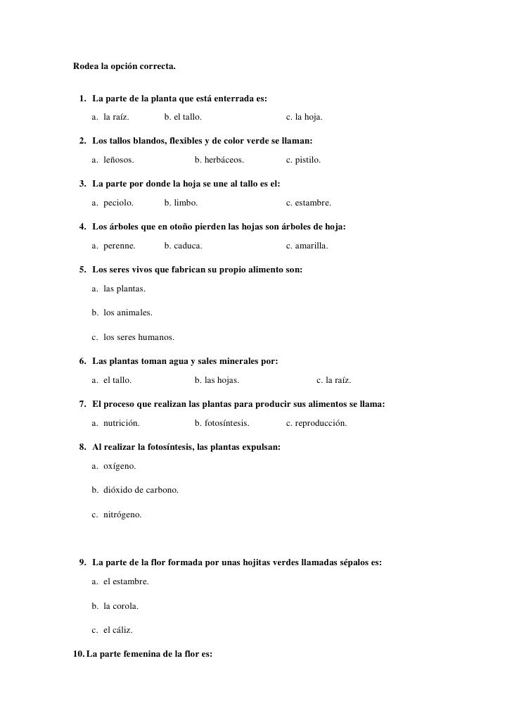 Ficha t cnica de la unidad did ctica for Arboles de hoja perenne informacion