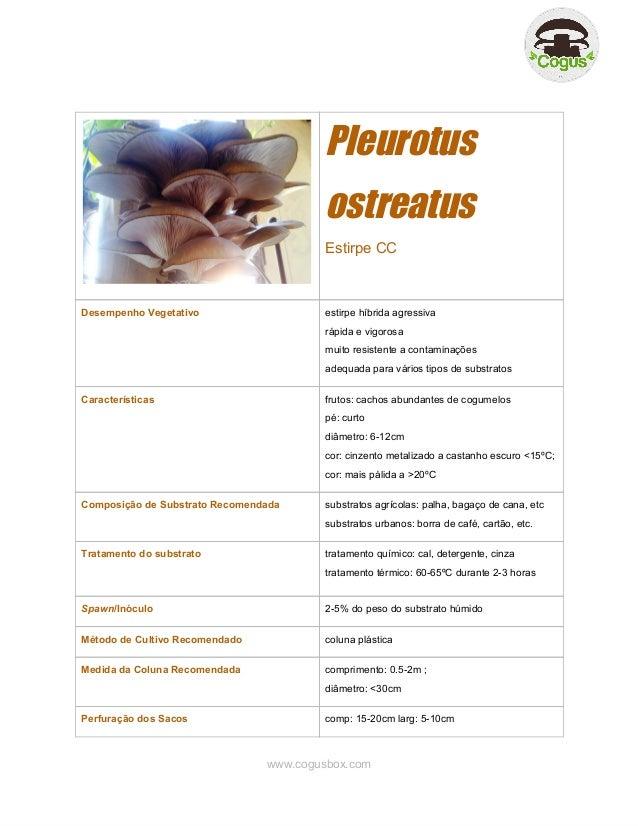 Pleurotus ostreatus EstirpeCC  DesempenhoVegetativo  estirpehíbridaagressiva rápidaevigorosa muitoresistente...