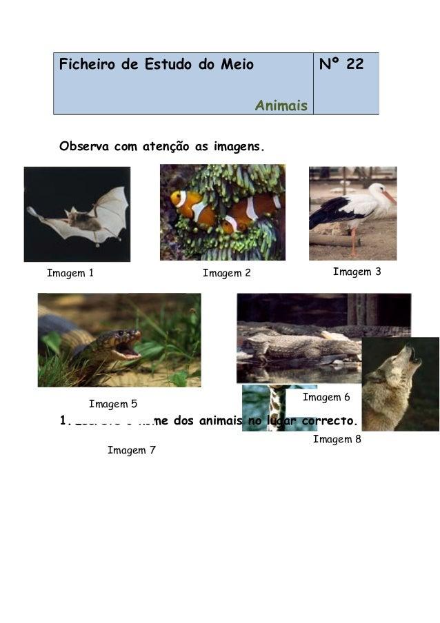 Observa com atenção as imagens. 1.Escreve o nome dos animais no lugar correcto. Ficheiro de Estudo do Meio Animais Nº 22 I...