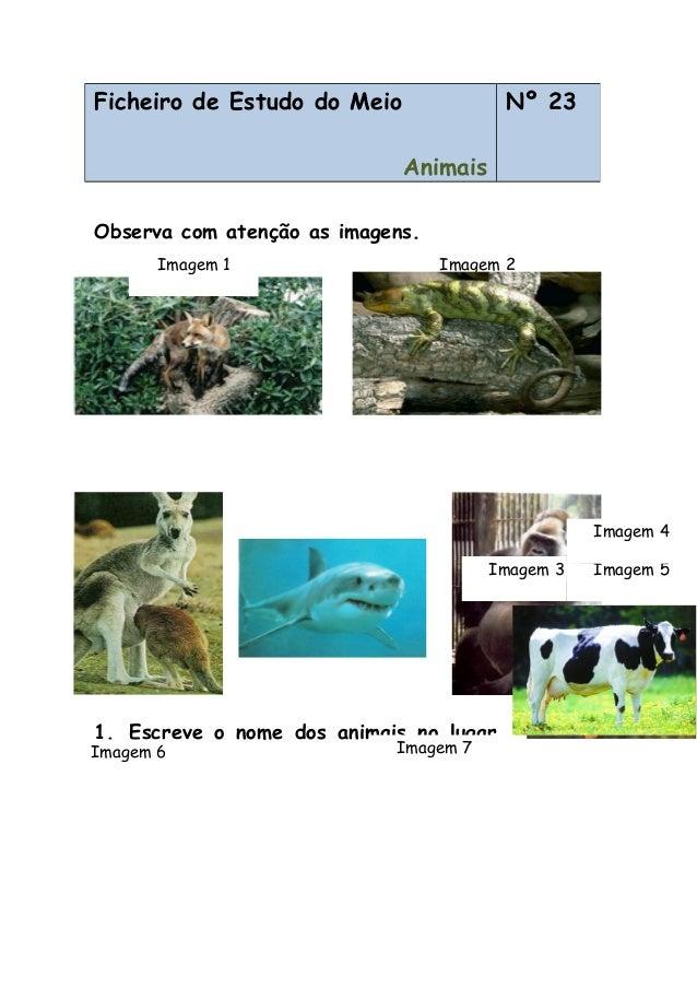 Observa com atenção as imagens. 1. Escreve o nome dos animais no lugar correcto. Ficheiro de Estudo do Meio Animais Nº 23 ...